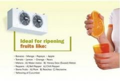 Fruit Ripening Machine