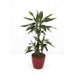 Leafy Plants
