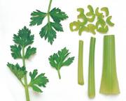 Oleoresin Celery