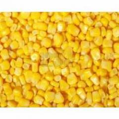 Maize Grains