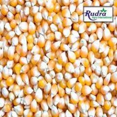 Yellow-corn For Animal Feed