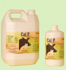 Oral Calcium