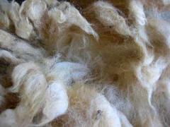 Raw White Wool