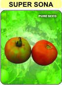 Hybrid Tomato Seed(Super Sona)