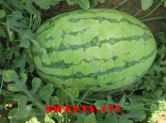 Hybrid Water Melon Seed(sweety-177)