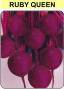 Beet Seed(s.l Ruby Queen)
