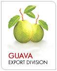 Natural Guava Pulp