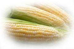 Indian yellow corn