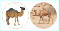 Camel Room - Air Fresheners