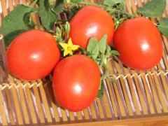 Tomatoe Seeds which are famous for their quality