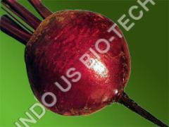 Beet Root Sowing Seed