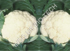 Cauliflower Sowing Seeds
