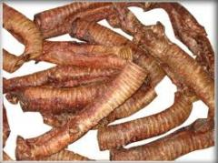 Dried Trachea