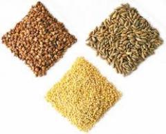 Cereal Grain