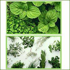 Natural Mint Products