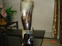 Polished Horn