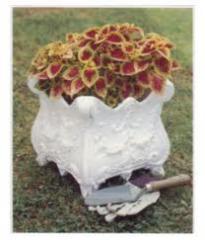 Flower gardens in pots