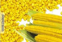 KLA Garden Fresh American Sweet Corn