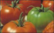 Vegetables Seed