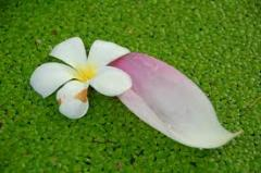 Flora Water