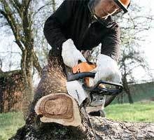 Versatile And Robust - Petrol Chain Saws