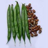 Dolichos Beans Seeds