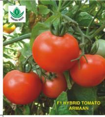 F1 Hybrid Tomato