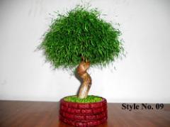 Bonsai Green