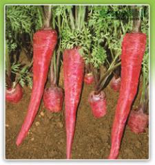 Premium Products-Carrot Bansi-2
