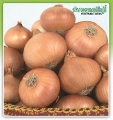 Premium Products-Onion Sunlight