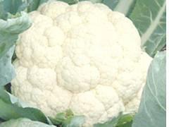 Cauliflower (Fujiyama)