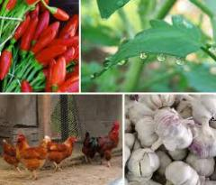 Fertilizer placers (organic fertilizer)