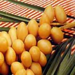 Fresh Date Fruits (Bharee)