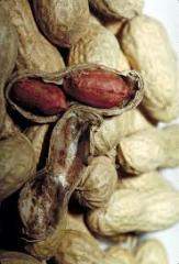Peanut seeds Flower