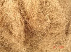 Сoir fibre