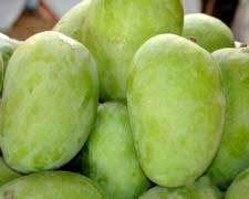 Semi Ripe Kesar Mango
