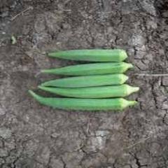 Hybrid Bhindi - Madhur