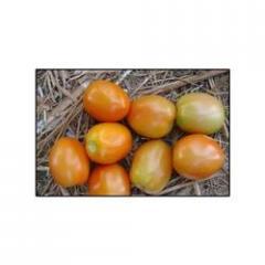 Hybrid Tomato -Brahma