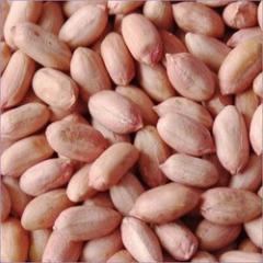 Groundnuts Kernels / Peanuts