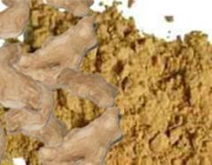 Ginger Dry/Powder (Rhizoma Zingiberis)