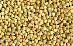 Buck Wheat Grain