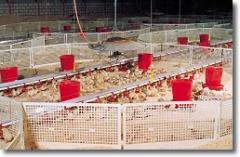 Brooder Guard For Rearing