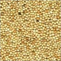 Green Yellow Millet