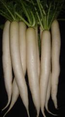Radish Gurdaspur Seeds