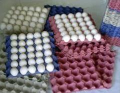 Plastic Egg Setting Trays