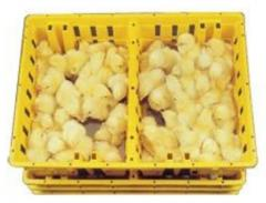 Chick Boxes