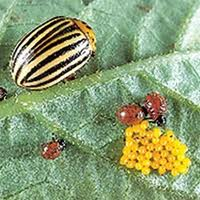 Biomont Bioinsecticide