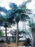 Artificial Coconut & Palm Tree