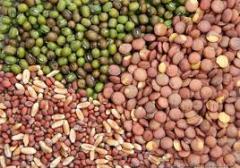 Cucurbits Vegetables Seed