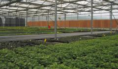 Greenhouse Evaporative Cooling Pads